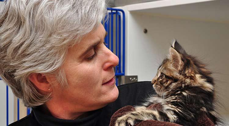 Kitten Care in Portsmouth, RI 02871
