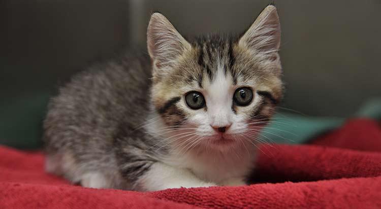 kitten-vet