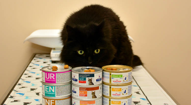 Pet Nutrition and Diet Services in Portsmouth, RI