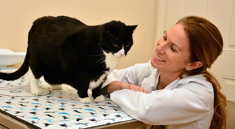 Feline Preventative Care in Portsmouth, RI