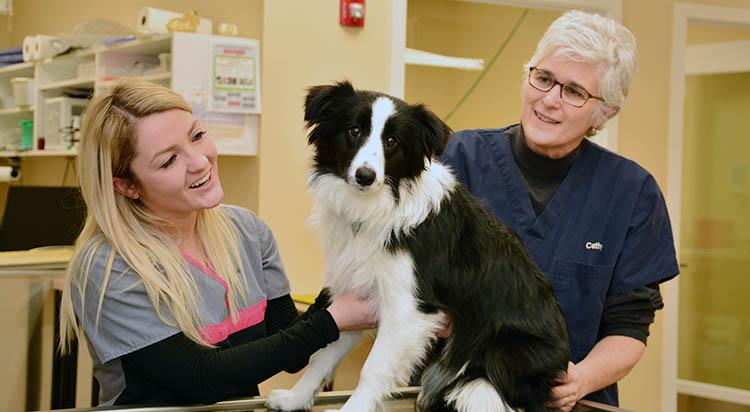 portsmouth-veterinarian_0033_IWC_2028
